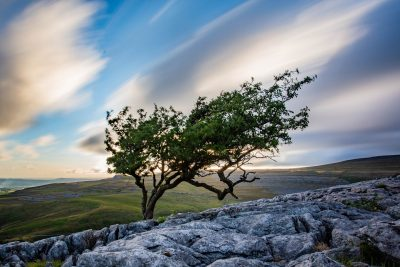 tree on twistelton scar top and moving clouds
