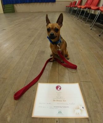 Dog with a certificate